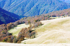 Autumn mountains  and stark bare trees Royalty Free Stock Photo