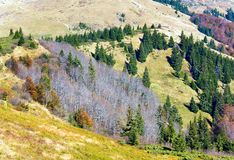Autumn mountains  and stark bare trees Stock Photography