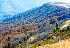 Autumn mountains  and stark bare trees Stock Image