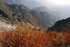 Autumn in the mountains of Uzbekistan Stock Images