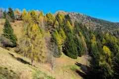 Autumn on the mountains Stock Image