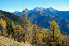 Autumn on the mountains Stock Images