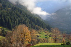 Autumn in the mountains with wonderful coloured trees and fog. Autumn in the mountains with beautiful coloured trees and fog. In the evening sun in Switzerland royalty free stock photography