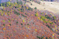 Autumn mountainside view Stock Photography