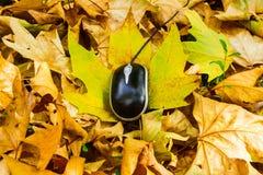 Autumn mouse Royalty Free Stock Photo