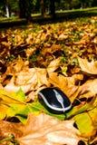 Autumn mouse Stock Photo