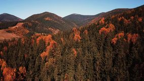 Autumn mouting forest landscape in flight. Up warm tonning stock footage