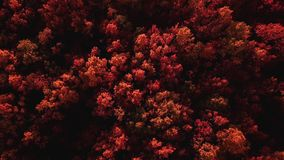 Autumn mouting forest landscape in flight stock footage
