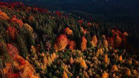 Autumn mouting forest landscape in flight. Up warm tonning stock video