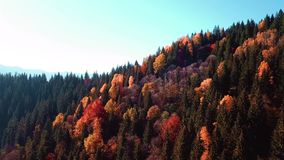 Autumn mouting forest landscape in flight. Up warm tonning stock video footage
