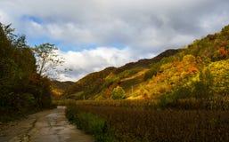Autumn Mt. Changbai Stockfotos
