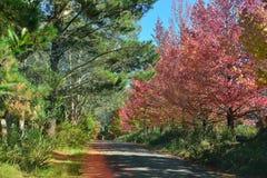 Autumn in Mt.Wilson NSW, Australia Stock Images