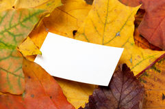 Autumn multicolor leafs with empty price card Royalty Free Stock Image