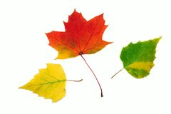 Autumn multicolor leaves stock images