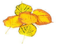 Autumn multicolored leafs Royalty Free Stock Photography