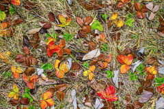 Autumn multicolored leaves background Royalty Free Stock Photography