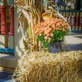 Autumn Mum Planter Lizenzfreie Stockfotografie