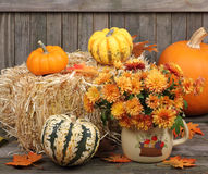 Autumn Mums and Gourds Stock Images