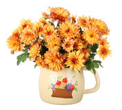 Autumn Mums Isolated Stock Image