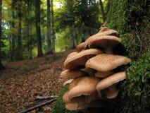 Autumn mushroom group. Autumn mushroom on a tree Stock Image