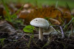 Autumn Mushrooms Fotografia Stock
