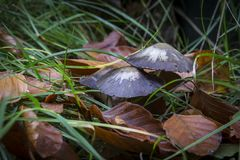 Autumn Mushrooms Fotografie Stock