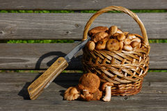 Autumn mushrooms. A small basket with autumn mushrooms stands on a wooden bench Royalty Free Stock Image