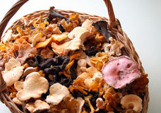 Autumn mushrooms. A basket full of edible mushrooms. I am still alive stock photography
