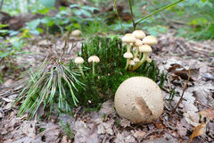 Autumn Mushrooms Royalty-vrije Stock Foto's