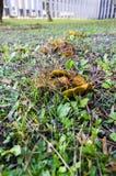 Autumn Mushrooms Imágenes de archivo libres de regalías
