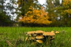 Autumn Mushrooms Arkivbilder