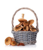 Autumn mushrooms Royalty Free Stock Photos