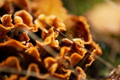 Autumn mushrooms Royalty Free Stock Photography