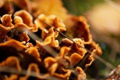 Autumn mushrooms royalty free stock photography