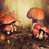 Autumn mushrooms and flowers Stock Photography