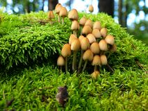 Autumn mushrooms Royalty Free Stock Images