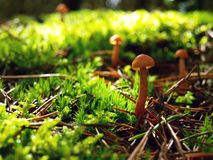 Autumn mushrooms royalty free stock image