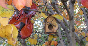 Autumn music. Playing violin and listening bird songs Royalty Free Stock Images