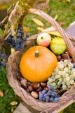 Autumn in my garden Stock Image