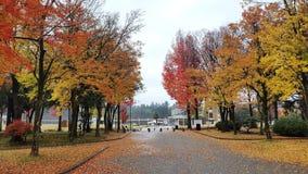 Autumn in my heart Royalty Free Stock Photos
