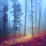 Autumn mysterious forest Stock Photo
