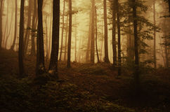 Autumn in a mysterious forest with fog at sunset Stock Photography