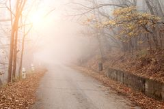 Autumn mystical road in foggy forest On Sunset stock photo