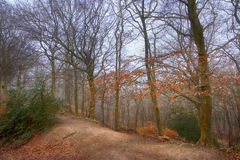 Autumn mystyc Forest. Forest wood  park garden autumn path sad landscape trees nature mystic wide angle countryside day travel Royalty Free Stock Photos