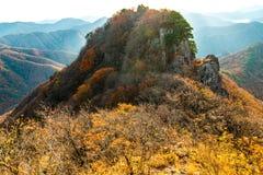Autumn In Naejangsan South Korea (bula i banan) Royaltyfri Bild