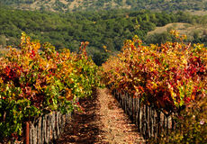 Autumn in Napa Stock Photos