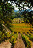 Autumn in Napa Stock Photography