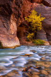Autumn of the narrows and Virgin River in Zion National Park Zio Royalty Free Stock Photo