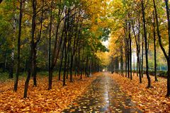 autumn nasz park Zdjęcie Stock