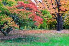 Autumn National Arboretum Trees Washington DC Royalty Free Stock Photography